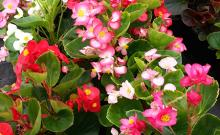 Taller ocupacional floricultura Asasam